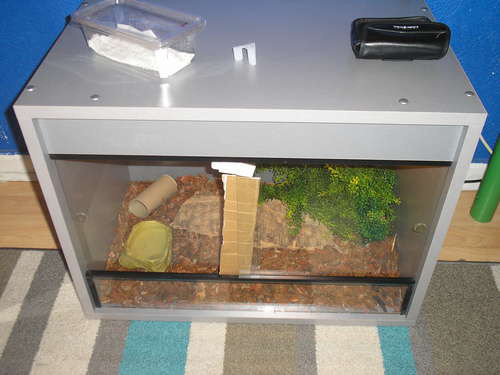 Snake Picture - A picture of the snake vivarium that Anthony's corn snake lives in...